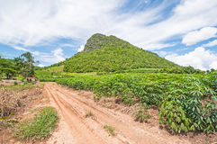 Mountains in Thailand. Countryside road with trees on both sides Royalty Free Stock Images