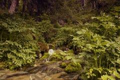 It is in the mountains of Trans-Ili Alatau. Weather changes frequently in the mountains of Trans-Ili Alatau spring Stock Photo