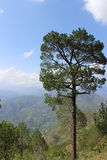 Mountains. And tree in himachal pradesh Royalty Free Stock Image