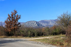 Mountains and trees near to the road to Vladimir city (Montenegro, winter) Stock Photography