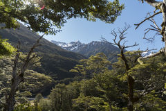 Mountains through the trees. New Zealand Royalty Free Stock Images