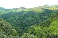 Mountains and tropical rain forest Royalty Free Stock Photos
