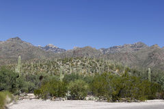 Mountains in Tucson, Arizona Royalty Free Stock Photography