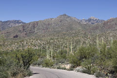Mountains in Tucson, Arizona Stock Image