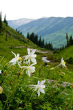 Mountains, valleys, and wildflowers Royalty Free Stock Images