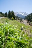 Mountains view. At summer near Almaty, Kazakhstan Royalty Free Stock Photography