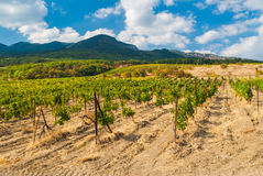 Mountains, vineyard and cloudy sky Stock Image