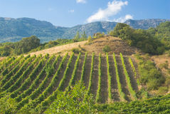 Mountains, vineyard and summer. Royalty Free Stock Images