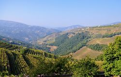 The mountains and the vineyards, an amazing landscape royalty free stock photos