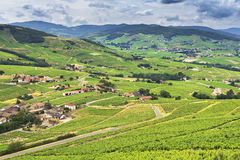 Mountains and vineyards of Beaujolais, France Stock Photo