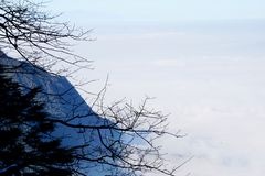 The mountains pass through the clouds, and the cypress branches stick out of the cliff royalty free stock photos