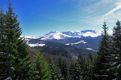 Mountains winter. Fir forest in mountains - winter Stock Image
