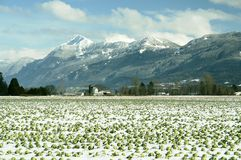 Mountains Winter Chilliwack BC stock photos