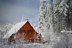 Mountains winter pine tree forest landscape with a chalet. Breathtaking landscape of snow covered pine trees and a wooden chalet in Harghita mountains in Romania royalty free stock images