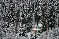 Mountains winter pine tree forest landscape with a wooden chalet. Breathtaking landscape of snow covered pine trees and a wooden chalet in Harghita mountains in royalty free stock image