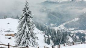 Rural landscape. Happy New Year. frozen very beautiful trees. Winter tale. stock video footage