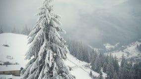 Rural landscape. Happy New Year. frozen very beautiful trees. Winter tale. stock video