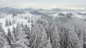 Rural landscape. Happy New Year. frozen very beautiful trees. Winter tale. stock footage