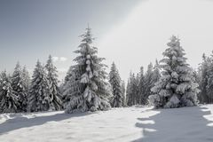 Mountains in winter, snow-covered trees in the sun. Sunny dayn stock photography
