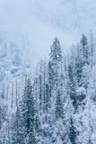 The mountains in the winter Royalty Free Stock Photography