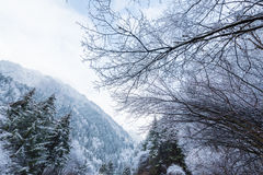 The mountains in the winter Royalty Free Stock Image