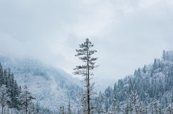 The mountains in the winter Royalty Free Stock Photos