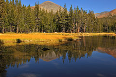 Mountains and a wood are reflected in water Royalty Free Stock Image