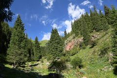 Mountains wood . Royalty Free Stock Images