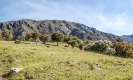 Mountains of Zahara Stock Images