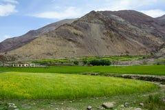 Mountainscape med fältet på dalen fotografering för bildbyråer