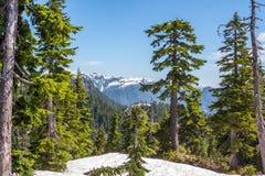 Mountainscape przez zima lasu obrazy royalty free