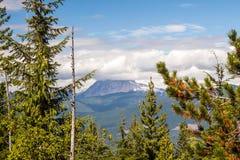Mountainscape przez zima lasu zdjęcie stock