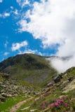 Mountainscape salvaje hermoso con las flores y las rocas Fotografía de archivo