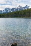 Mountainscape verticale di Banff con i pini ed il lago Fotografie Stock Libere da Diritti