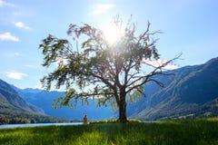 Mountainsee im Sommer - See Bohinj Stockfotos
