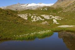 Mountainsee mit Cottongrass Stockfotografie