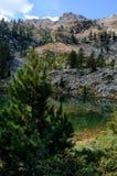 Mountainsee und Lärchenbaum Lizenzfreie Stockfotografie