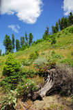Mountainside. In Montana with flowers and trees stock photo
