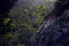 mountainside Fotografia Stock Libera da Diritti