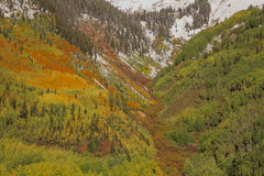 Mountainside Aspens in Fall Royalty Free Stock Photography