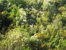 Mountainside with dense vegetation. A mountainside with dense vegetation of trees and tall shrubs With flowers and greenery Royalty Free Stock Photography
