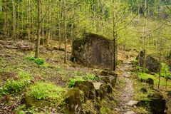 Mountainside footpath in verdant woods of spring Royalty Free Stock Photos