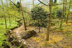 Mountainside footpath in woods of verdant spring Royalty Free Stock Photos