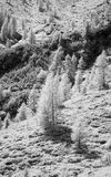 Mountainside  Monochrome. Trees on the mountainside taken in infrared monochrome mode black and white Stock Photo