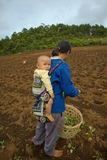 On the mountainside a mother of the Hmong ethnic group carry her son, during planting cabbage Stock Photography
