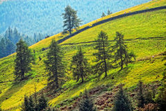 Mountainside nature view. Trees on a mountainside, in a vibrant natural setting Royalty Free Stock Images