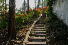 Mountainside steps in shady flowers on sunny day Stock Photography