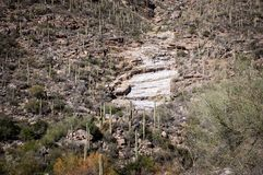 The mountains that surround Sabino Canyon. Mountainside view of Sabino canyon in Tucson, Arizona which is covered with saguaro cactus Stock Image