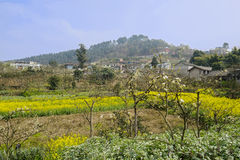 Mountainside village in flowering sunny spirng Royalty Free Stock Photo