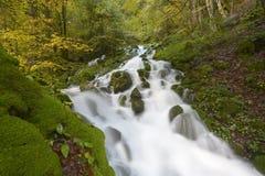 Mountainstream avec des feuilles d'automne Photo libre de droits